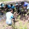 ท่าอากาศยานภูเก็ตร่วมกิจกรรม โครงการปลูกป่าชายเลน